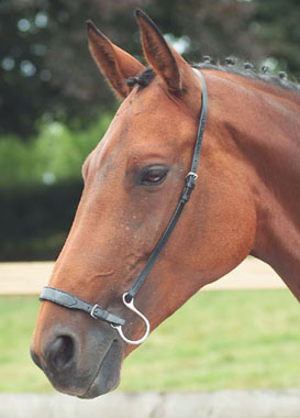 Kineton Noseband Nosebands Bridles Amp Accessories